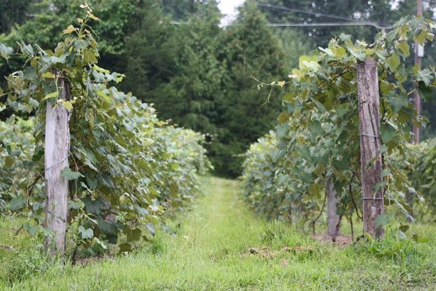 Photo of Buddy Boy Winery & Vineyard